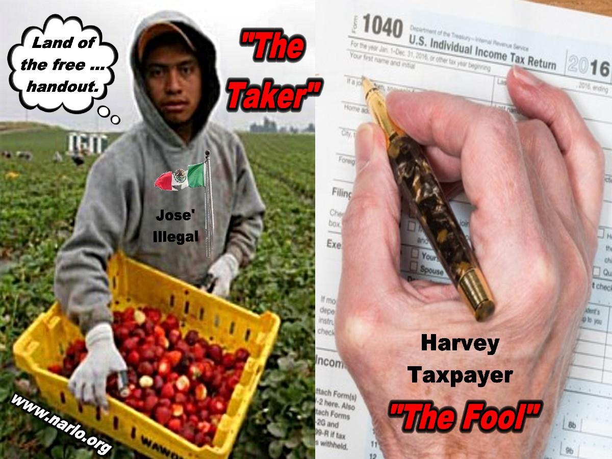 Taxpayer Fools=