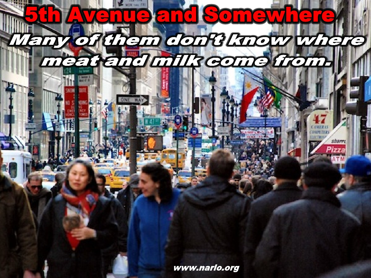 Urban Dwellers=